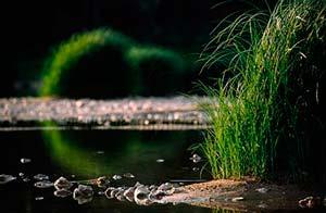 stage photo paysage en Maine et Loire - herbes sauvages sur la Loire