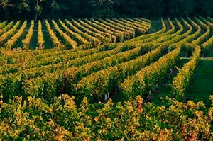vignes_souzay - stage initiation photo paysage