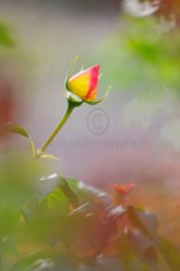 stage photo profondeur de champ - fleur fond flou