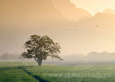 rice-field in karstic landscape, Hpa An, Kayin state, Myanmar