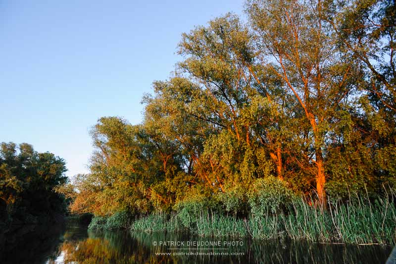 Forêt allluviale
