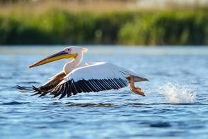 voyage photo delta du Danube