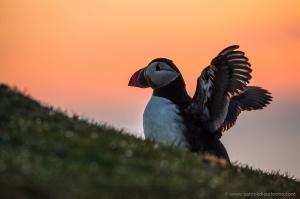 circuit photo shetland, animalier