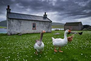 voyage photo shetland, ferme