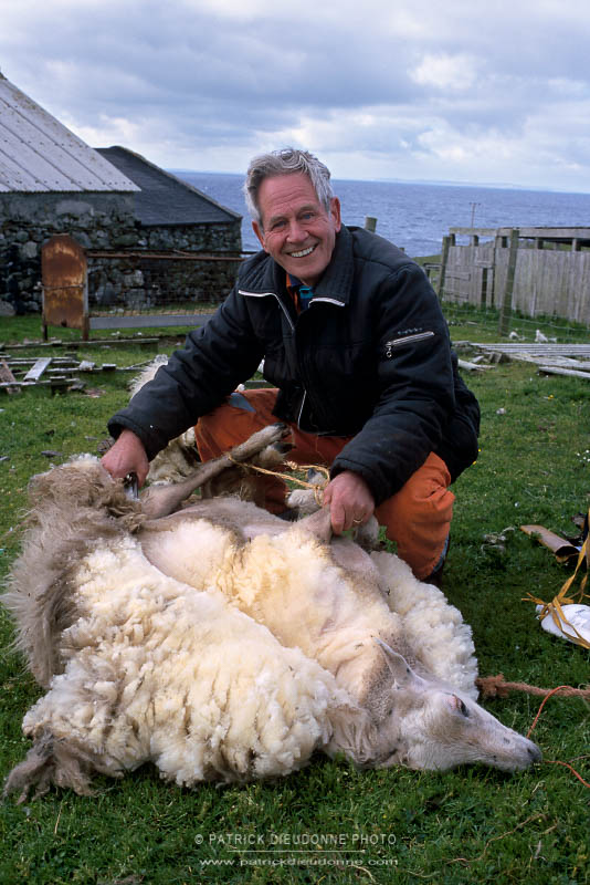 Tonte des moutons
