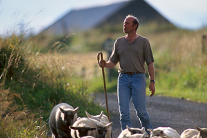 séjour photo shetland, berger