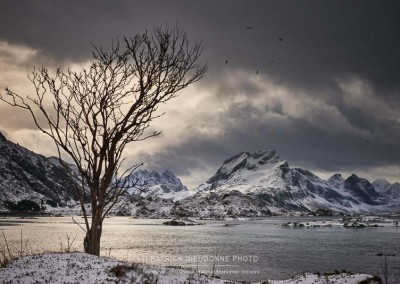 Torsfjorden fjord, Lofoten