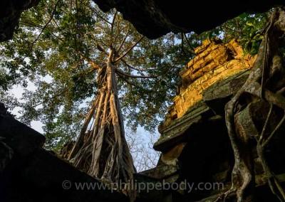 CAMBODGE, ANGKOR, TEMPLE DU TA PROHM//Cambodia, Angkor, Ta Prohm Temple