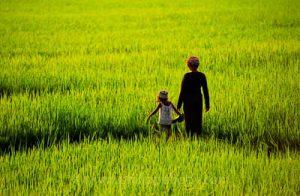 Rizières, Kompong Chhnang - séjour et stage photo au Cambodge