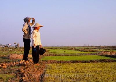 CULTURE DU RIZ, KOMPONG CHHNANG, CAMBODGE//GROWING RICE, KOMPONG CHHNANG, CAMBODIA