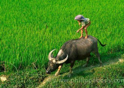 Voyage photo Vietnam_11