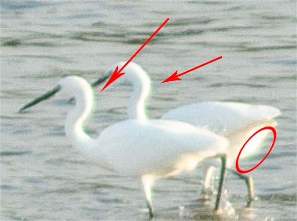 Petit guide des défauts optiques de nos objectifs photo